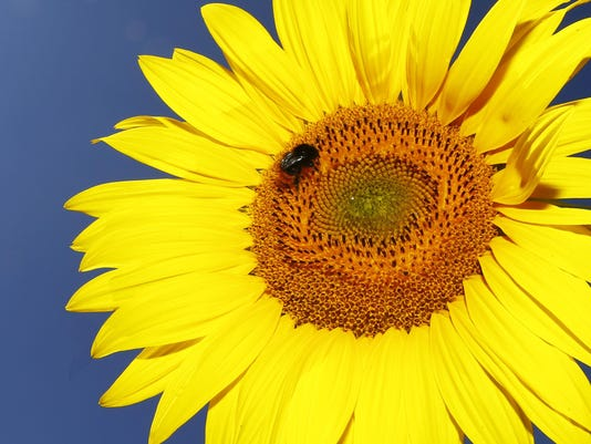 Pollinator Decline (3)