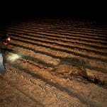 Jody Greene inspects the rut created by the hog, he and Jeff Goeggle shot while hunting hogs on Arty Person's cornfield in Deer Park, La. Goeggle and Greene, who run Double G Hog Control in Monterey, La., with Greene's wife Tracy, have hunted hogs together for nearly three years for farmers and landowners. Last year they killed 420 hogs. BRITTNEY LOHMILLER/THE NATCHEZ DEMOCRAT