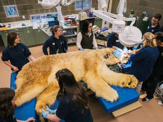 Polar Bear Dentist Chair