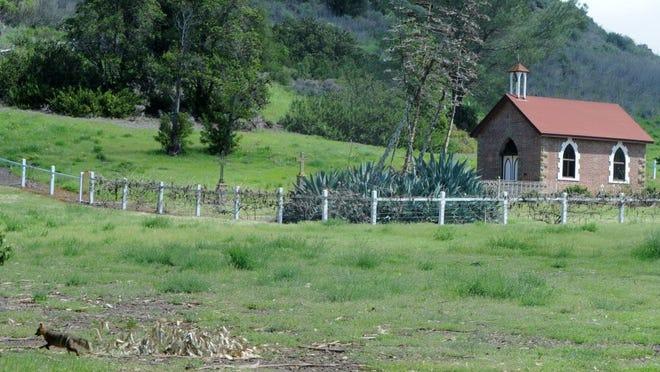 An island fox walks near a ranch building on Santa Cruz Island.