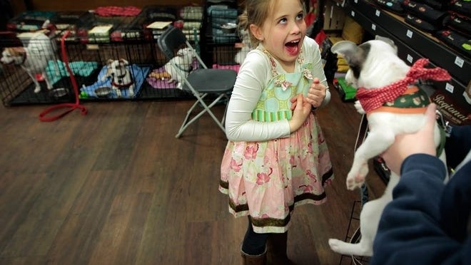 Feb. 13, 2016 — Lily Presson, 8, yelps as Rupert gets a little rough while they are playing during an adoption event sponsored by Tails of Hope Dog Rescue Saturday afternoon at the Hollywood Feed on Broadway. Tails of Hope fosters difficult and sickly adoption prospects as they try to rehabilitate the animals and get them into permanent homes. (Jim Weber/The Commercial Appeal)