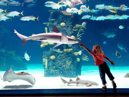 Newport Aquarium Makes Top 10 List