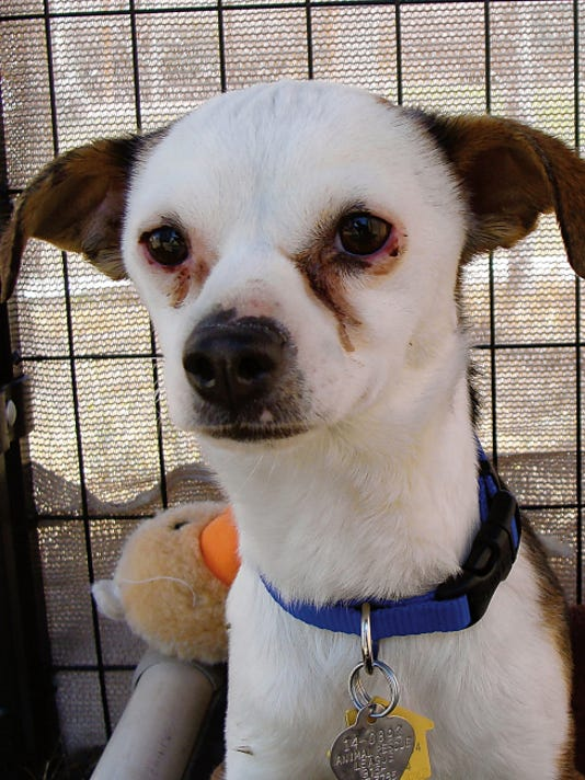 Oscar is available for adoption through the Animal Rescue League of El Paso.