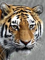 The Seneca Park Zoo announced the death of Anastasia,
