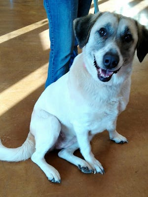 Cathleen, a 6-year-old Great Pyrenees mix, traveled 40 miles to go back to a family that gave her up for adoption.