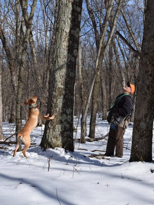 Ron Woodward looks for a squirrel that Fanny says is up this tree.