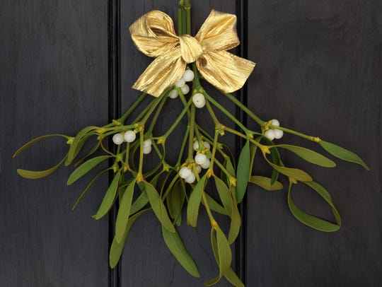 Both the leaves and berries of mistletoe are more toxic