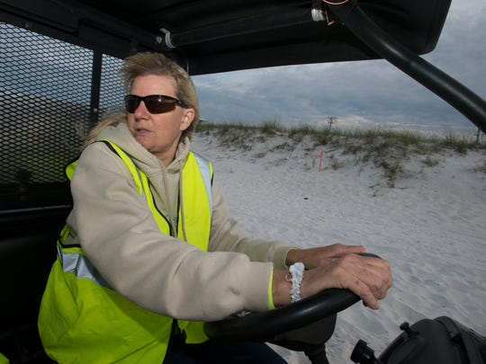 Cathy Holmes patrols Navarre Beach in search of sea turtle nesting sites Monday morning May 16, 2016. Holmes and a group of volunteers are patrolling to Navarre Beaches for signs of turtle nests that may be lost or destroyed by beach renourishment. If the volunteers find a nest before the project ends the volunteers will relocate the egg to a safe site farther down the beach.