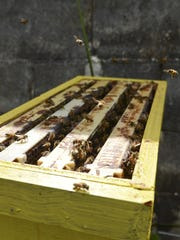 In this 2013 file photo, honey-producing bees hover