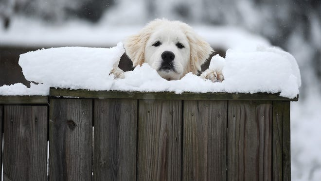 A dog peeks over its snow-covered fence on Tazwell Avenue in Cape Charles, Va. on Feb. 26, 2015.