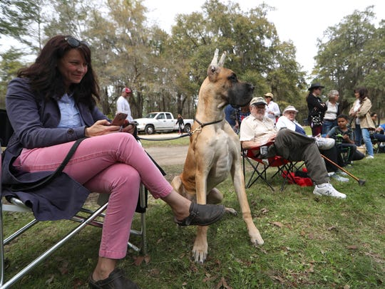Sara Chant watches the Red Hills Horse Trials with