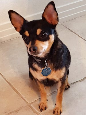 Berkeley is up for adoption at We Care For Animals in Mesquite, Nevada.