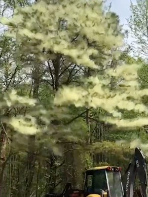 This massive pollen cloud in New Jersey reminds us its