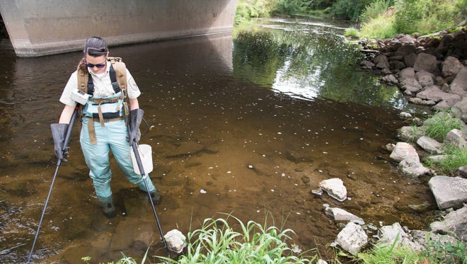 U.S. Fish and Wildlife Service Biologist Rebecca Phillips uses wire mesh paddles to run an electric current into the sediment of the East Twin River out of Mishicot to search for invasive sea lamprey larvae.