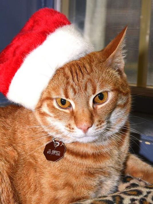 holiday cat 2 (00000003)
