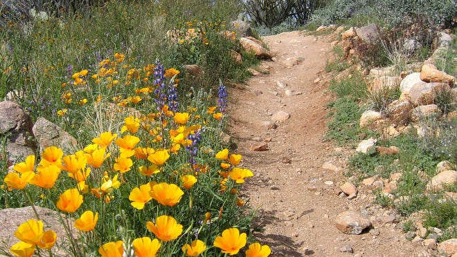 The Arizona State Parks Board is seeking volunteers to serve on two advisory boards to help manage natural resources and trail systems like this one at Catalina State Park near Tucson