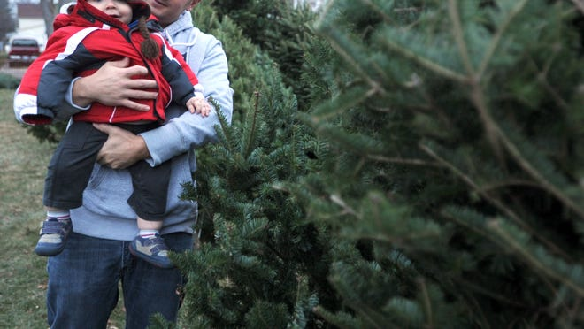 Adam Hennessy and his son, Mason, 1, look at trees in the Y-Men Service Club Inc.'s Christmas tree lot Thursday. About 450 trees fills the tree lot at Church Street and Reed Avenue.
