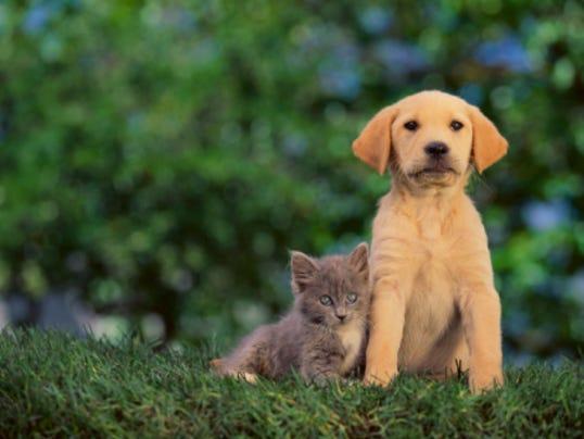 puppy with kitten.jpg