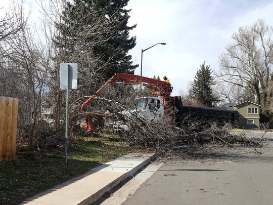 Fort Collins resident Brian Strock said a tree hit part of his car when it fell down due to high winds on Tuesday.