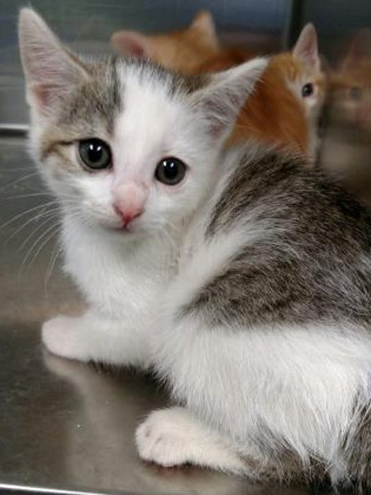 Pet of the day Oct. 10