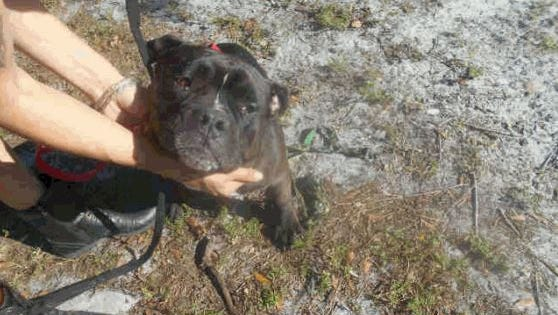 One of two pit bulls authorities say broke into a home and killed a cat in Cocoa.