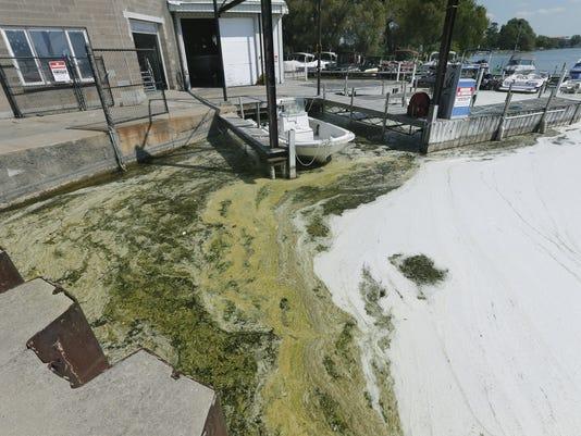 Algae and foam