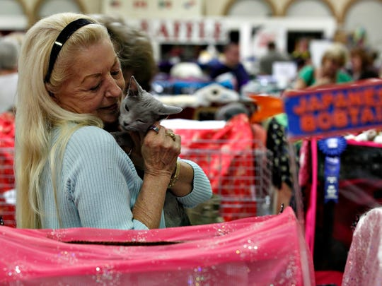 Tampa resident Cynthia Wagner nuzzles her champion Blue Russian cat, Paulette, as she prepares for judging at the 20th Annual Platinum Coast Cat Fanciers Cat Show at the Araba Shrine Temple on Saturday, July 23, 2011, in Fort Myers.