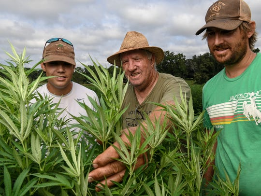 Jordan Ford, left, Danny Ford, and his son Lee Ford look for any plant problems between cutting weeds between rows of hemp at their farm in South Carolina.