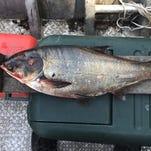 Asian carp near Lake Michigan must be a 'wake-up call,' lawmakers say