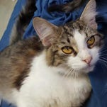 Galaxy has a silky coat and a friendly disposition.