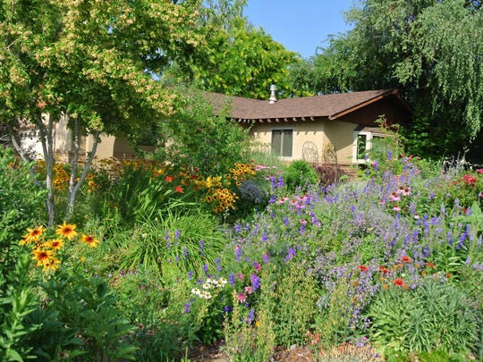 To protect your trees, replant areas from which turf has been removed with other plants, like water-wise native and adapted perennials and shrubs, and mulch the area with organic materials.