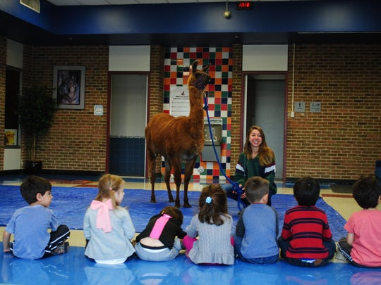 A staff member from the Charles L. Bower Farm introduces Cinnamon the Llama to preschool students at West Maple Elementary.