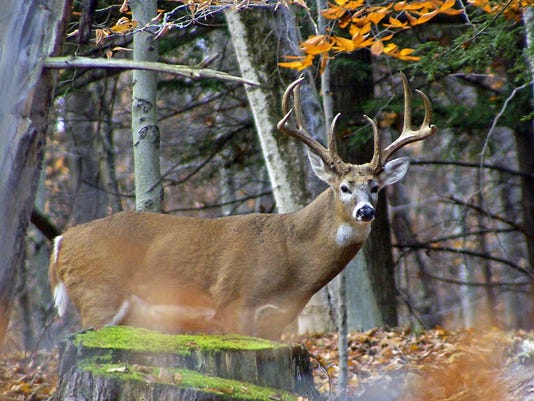 use with entry on deer strikes.jpg