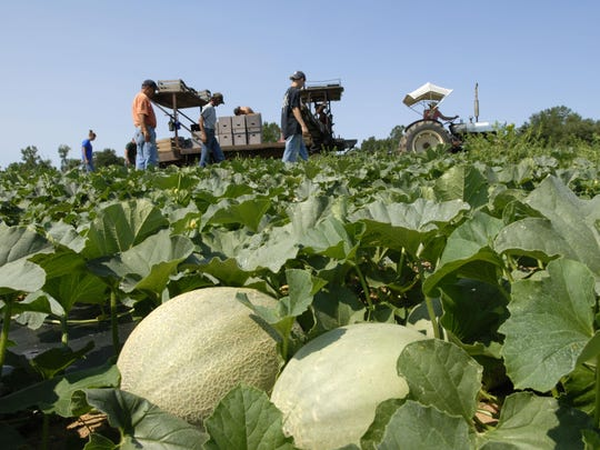 The food and agriculture industry contributes over $101 billion dollars annually to Michigan's economy.