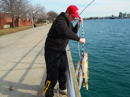 Josh Noll, of St. Clair Shores, hoists a stringer of five walleye from the St. Clair River. He was fishing with his father, Gordie, and their friend, Paul Sikes.