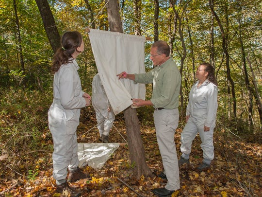 Dr. Richard Ostfeld surveys ticks collected on a white drag cloth at a field site on the Cary Institute's campus.