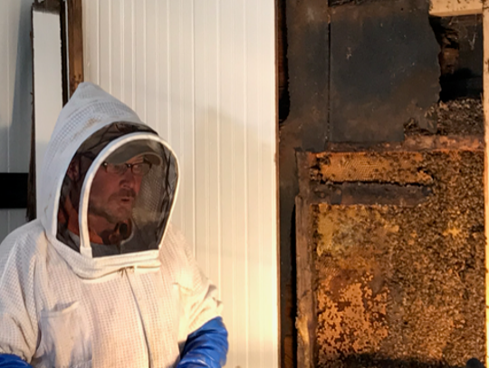 Beekeeper Dirk Morgan suited up to cut out a 25-year-old