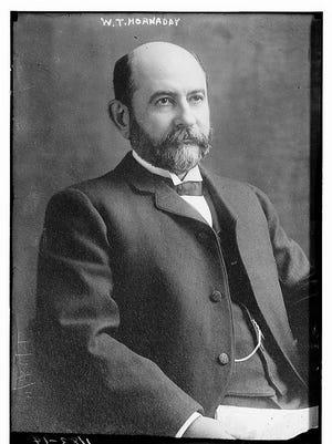 William Hornaday
