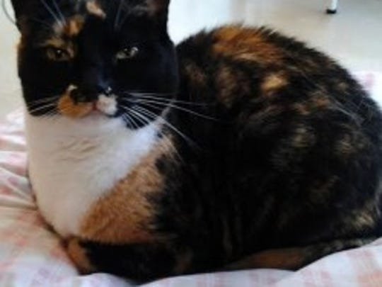 Mila, about 4, is friendly and affectionate. She loves to be petted, and she would be a great companion. Her other favorite things are playing with string and toy mice. Monmouth County SPCA, Eatontown:732-542-5962