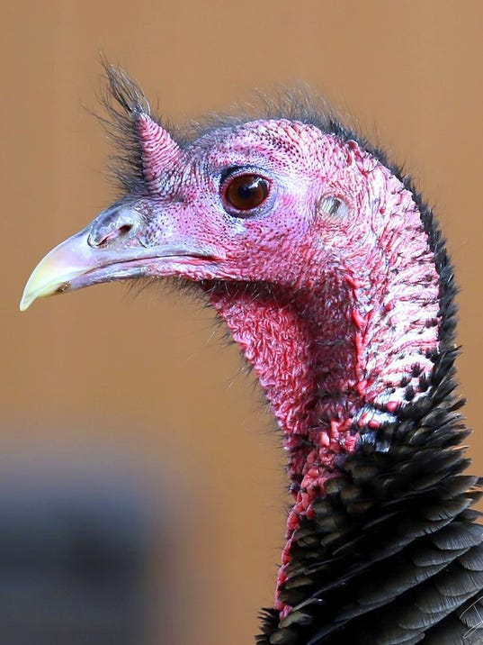 turkey one