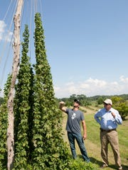 NJ Secretary of Agriculture Douglas Fisher toured Screaming' Hill Brewery in Cream Ridge , NJs first on farm brewery. Brett Bullock (left), co-owner of the brewery, shows Fisher one of the hops plants on the farm. —August 25, 2015-Cream Ridge, NJ.-Staff photographer/Bob Bielk/Asbury Park Press