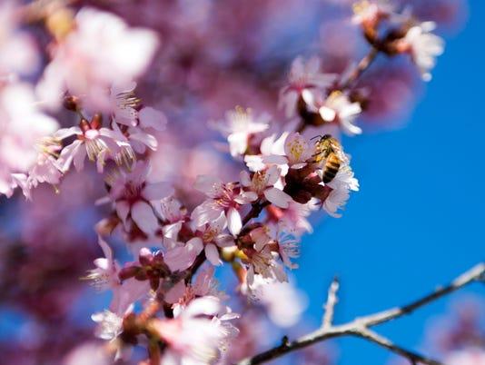 allergies-0055.jpg