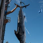 White Marlin Open Day 5: Monster white marlin upends leaderboard