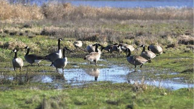 The estimated 2,500-acre refuge is home to Canada geese, deer, bald eagles and many other species of wildlife.