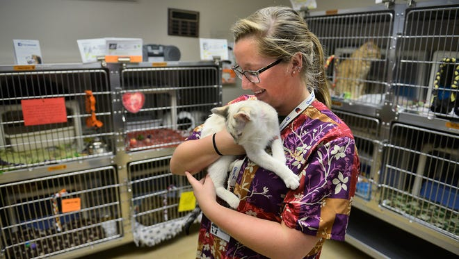Tri-County Humane Society volunteer Macy Iotte cuddles with Toffee, a 1-year-old domestic shorthair up for adoption, Friday in St. Cloud. The shelter has a live release rate of 97 percent.