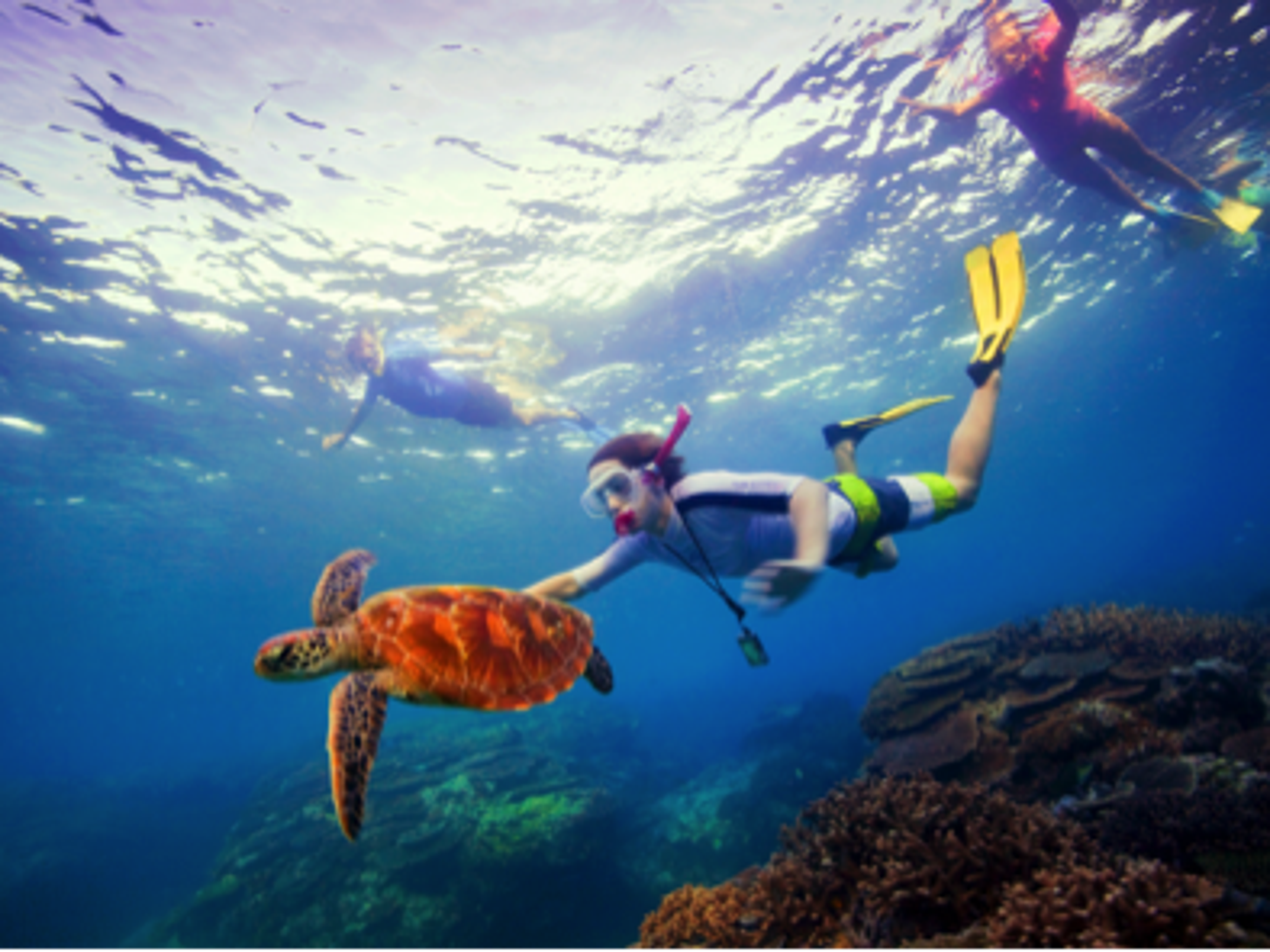 Take a day trip to the reef where you can snorkel