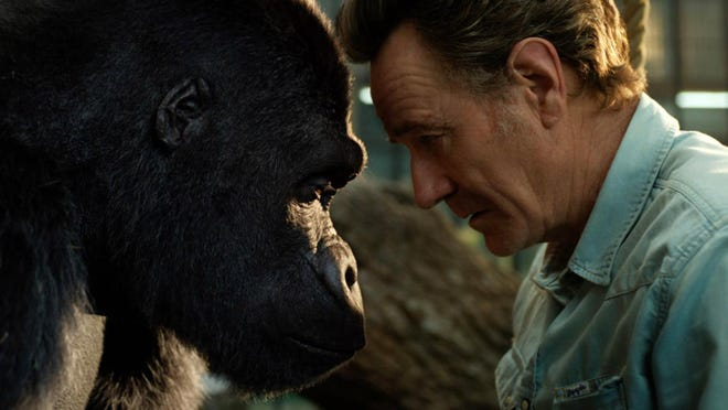 """Bryan Cranston, right, is seen with a gorilla named Ivan (voiced by Sam Rockwell) in a scene from """"The One and Only Ivan."""""""