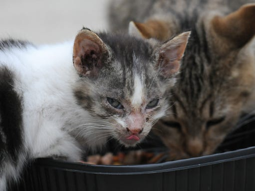 Getting Feral Cat To Take To New Outdoor Home