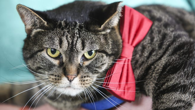 Look at that face. Would you vote for this cat? Lester thinks you could do worse.