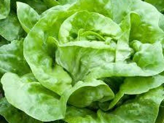 IMG_buttercrunch-lettuce_1_1_07A4LDTP.jpg_20150306.jpg